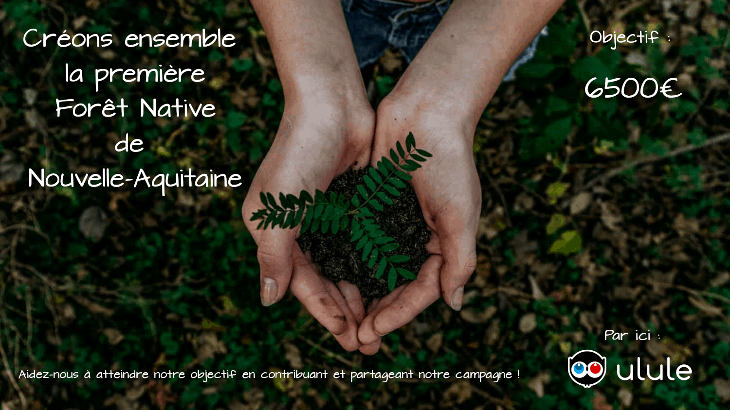 Reforestation participative