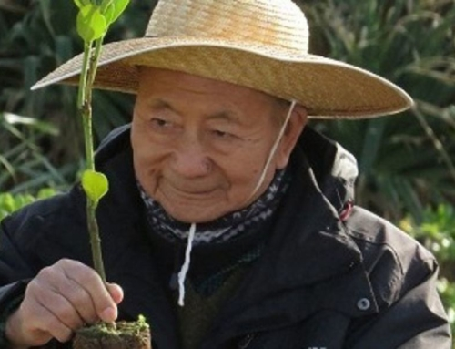 Akira Miyawaki : l'origine de sa méthode de reforestation