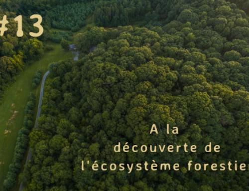 Forêt tropicale et forêt tempérée