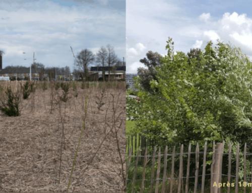 Méthode Miyawaki : la méthode pour recréer des forêts natives !