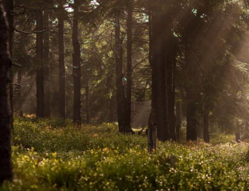 Forêt à vendre : pourquoi investir ?