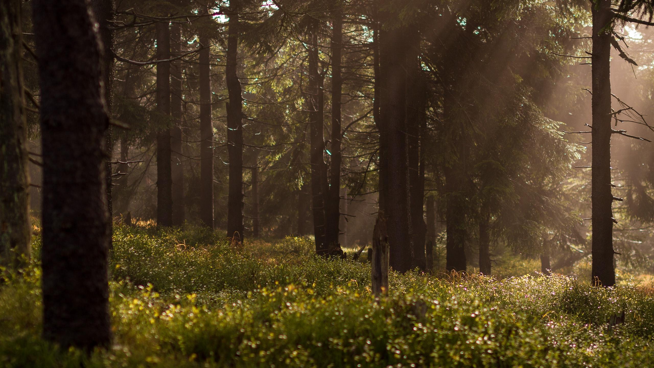 Forêt française à vendre
