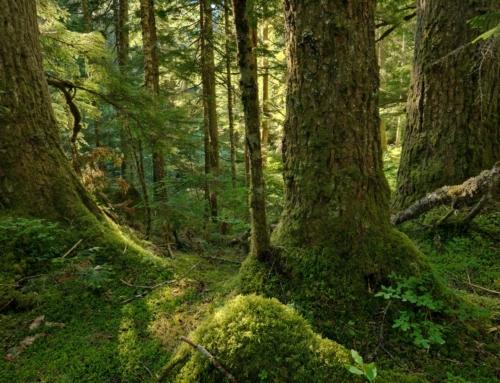 Comment utiliser la reforestation comme un outil écologique efficace ?