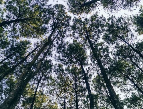 Reconnaître les arbres : 7 conseils pour identifier les essences