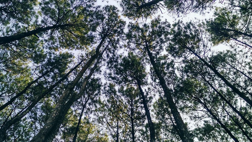conseil pour reconnaître un arbre facilement