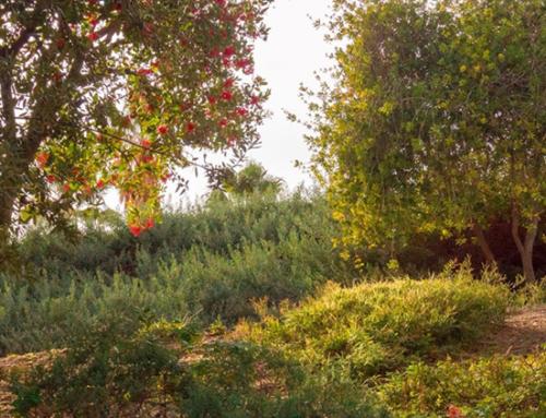 Réussir à planter son jardin forêt en quelques étapes !