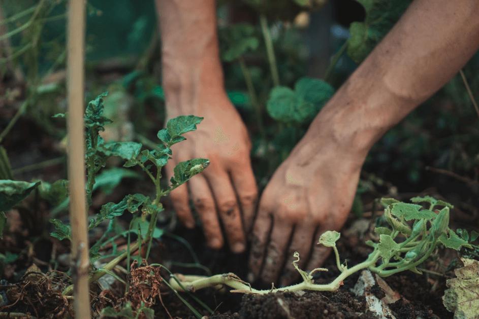 comment planter une forêt guide